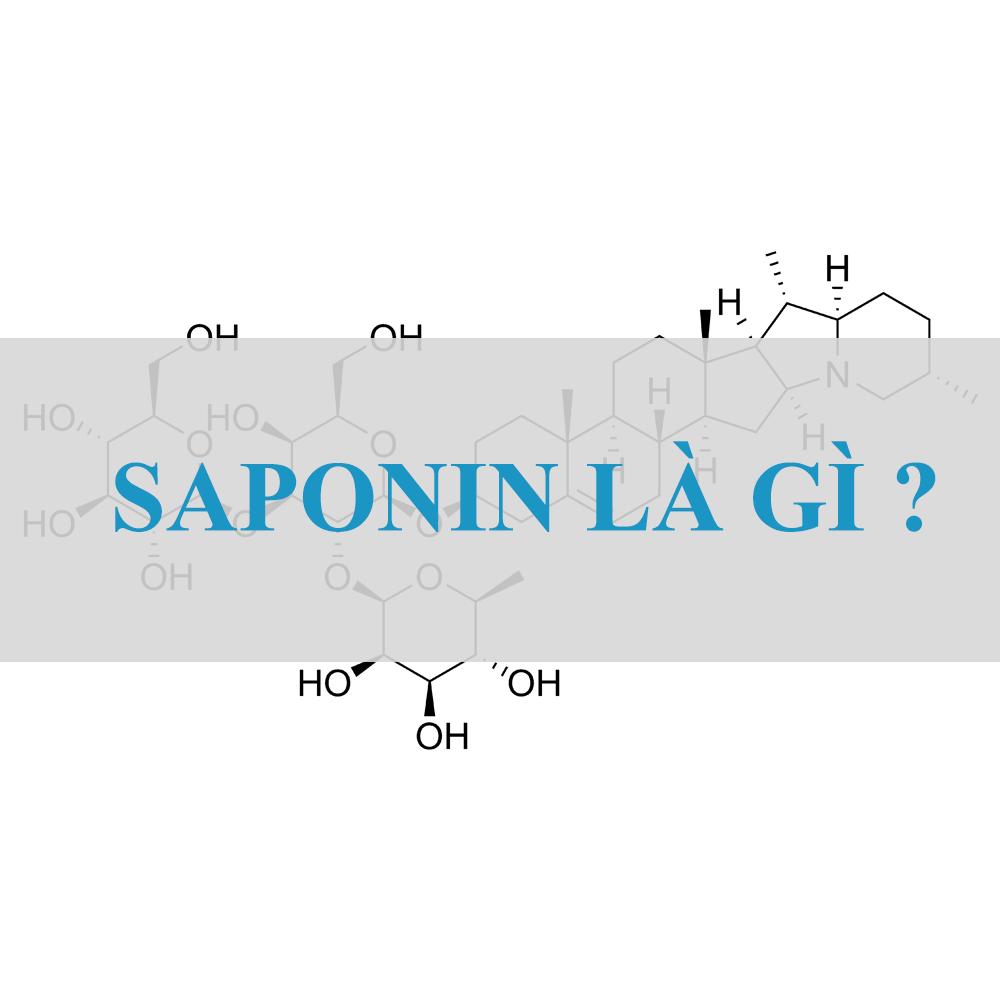 Saponin trong yến mạch có lợi ích gì Saponin trong yến mạch có lợi ích gì ?