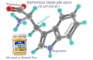 tryptophan trong yến mạch Tryptophan trong yến mạch có lợi ích gì ?